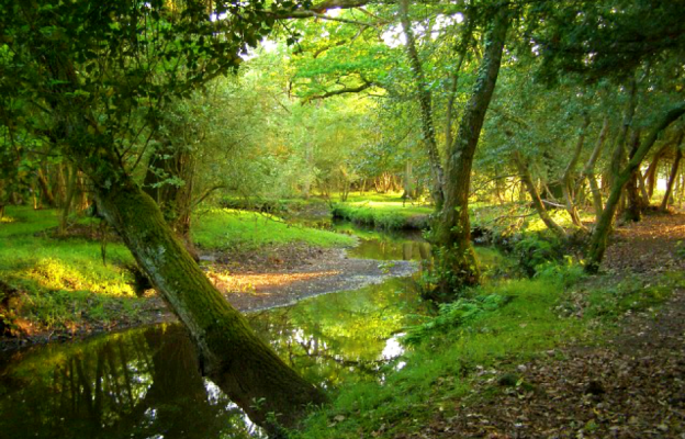 4 New Forest River Wildlife Hotspots